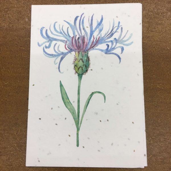 Pack-It-In-Zero-Waste-Living-Centaurea-Flower